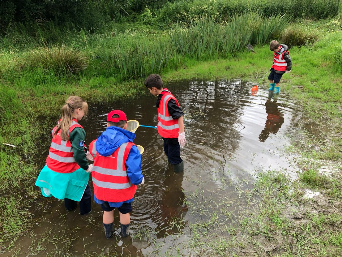 Pond Dipping in Billesley Common