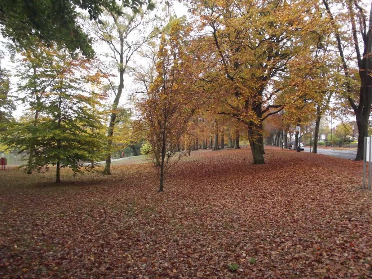 Autumn at Swanshurst Park by Elliot Brown